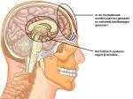 hersenen op overleven